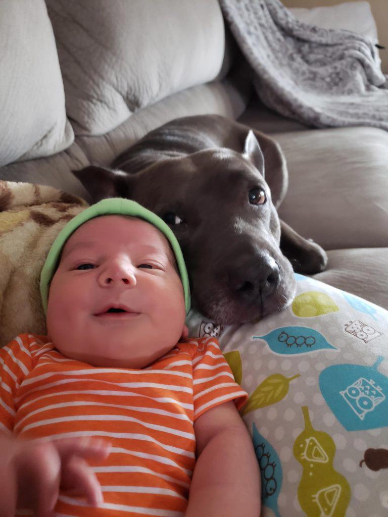 pit bulls e crinças