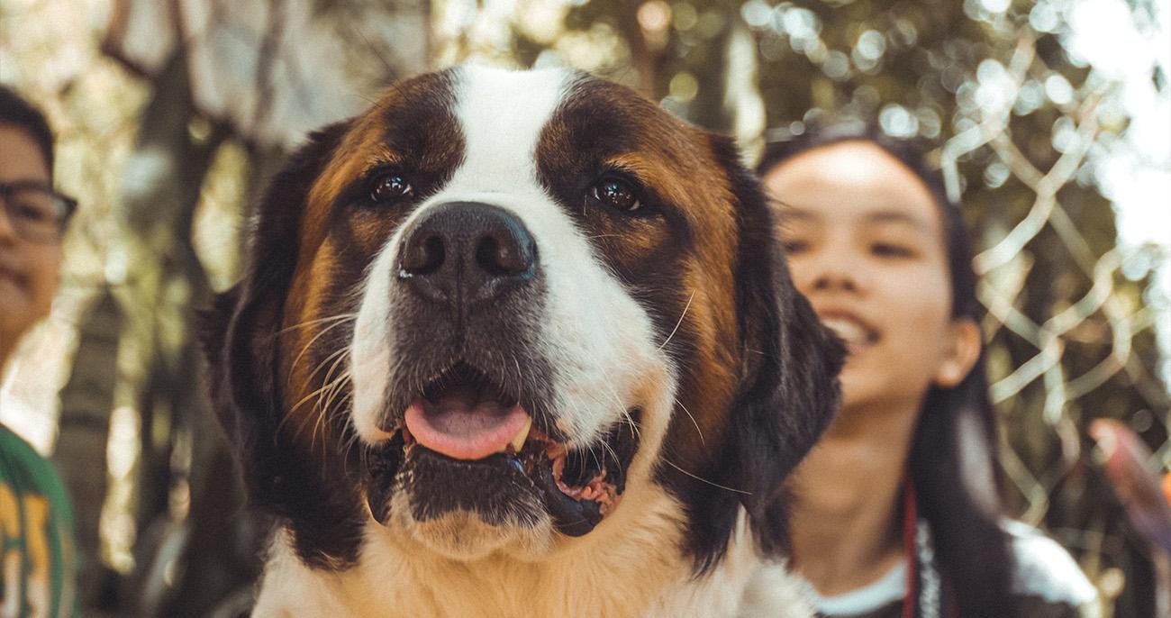 raças de cachorro mais amáveis