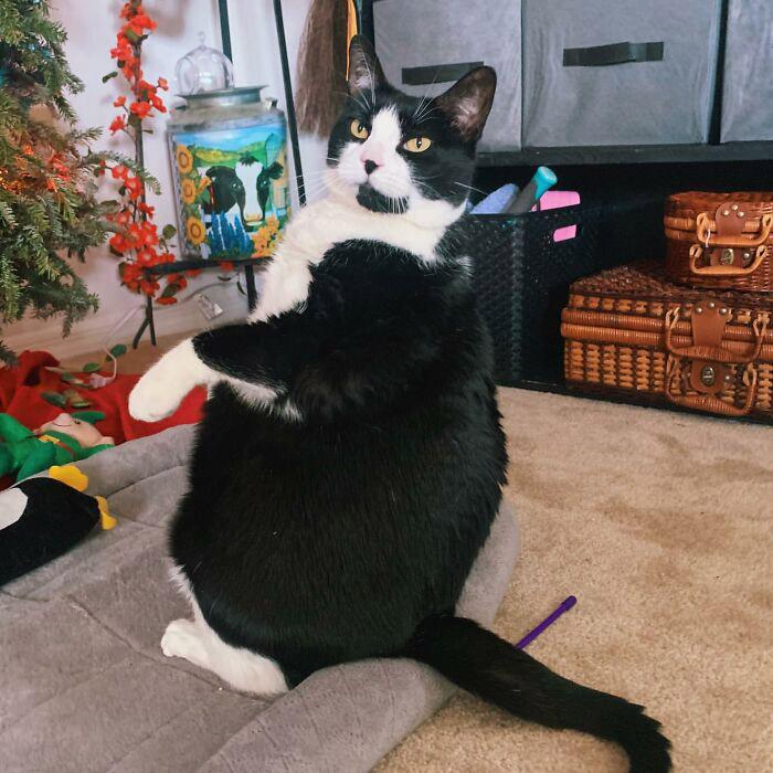 regime gato