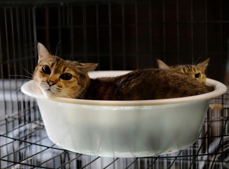 resgate de gatos