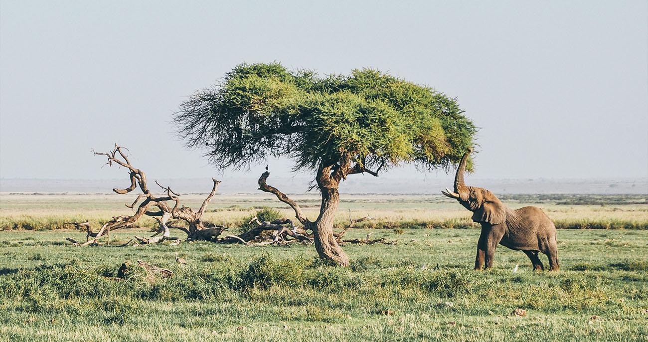 tudo sobre a África