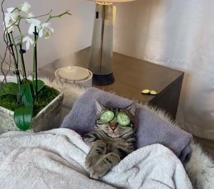 vídeo gato no spa